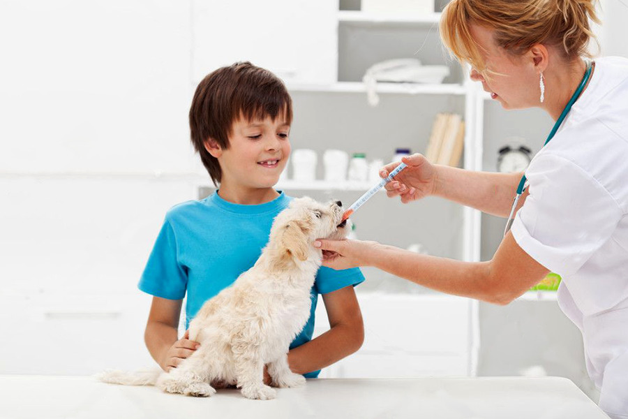 Cachorro passando por uma antibioticoterapia, tendo remédio aplicado diretamente na sua boca por uma veterinária enquanto seu tutor, uma criança, o segura sorridente