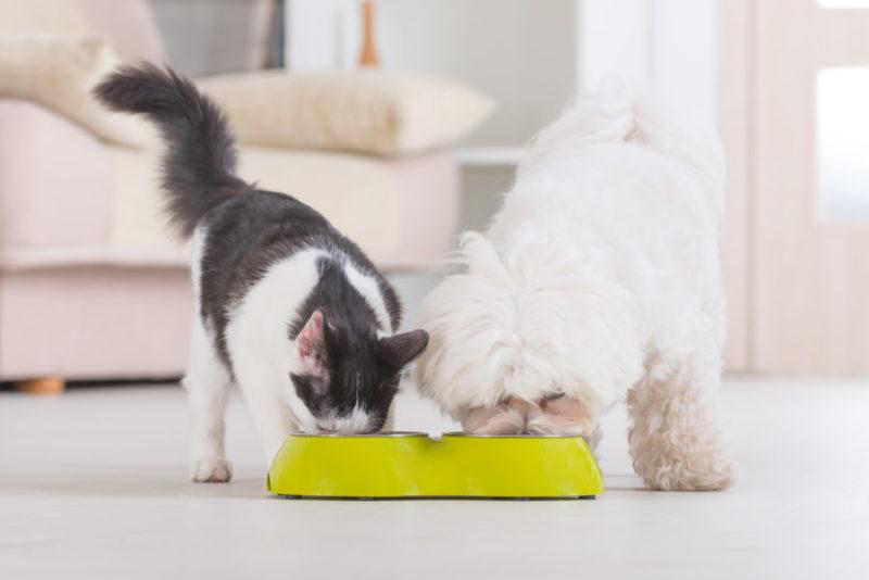 Cachorro branco e gato preto e branco comendo em um tijela dentro de casa