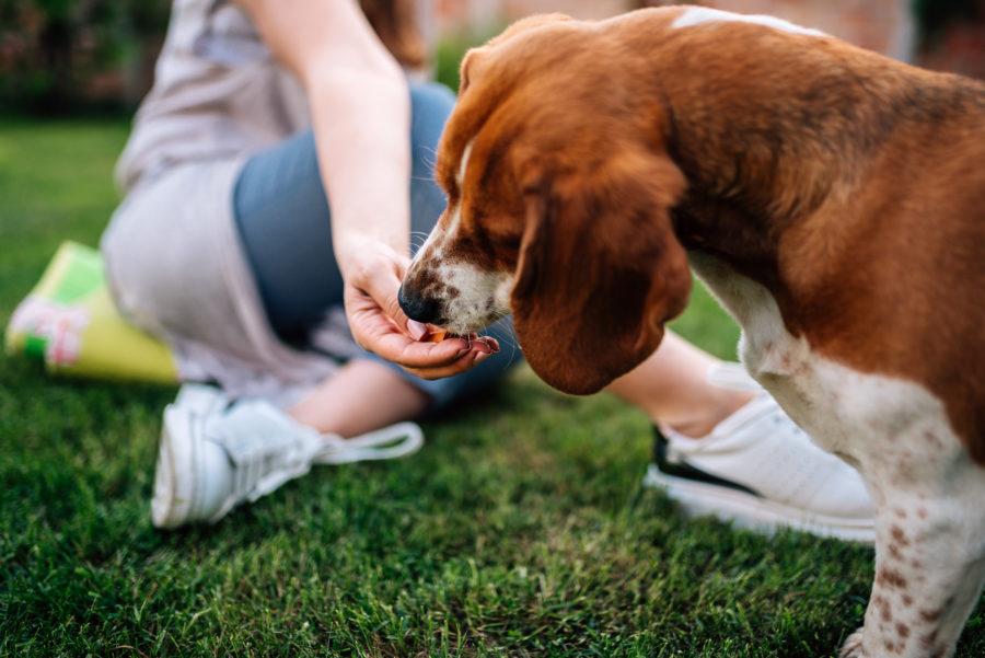 Close de cachorro comendo comida da mão de sua tutora ao ar livre