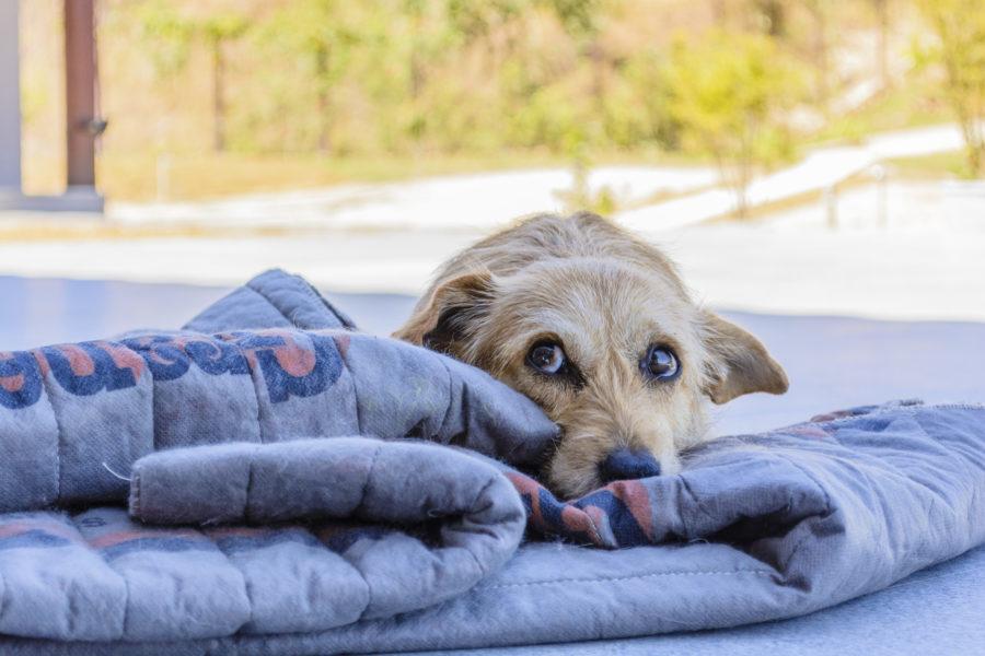 Cão deitado descansando no exterior de uma casa com o intuito de gastar energia e ficar calmo