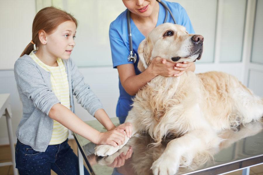 Veterinária examinando um cachorro com câncer e a criança tutora segurando na pata do animal com cara de preocupação