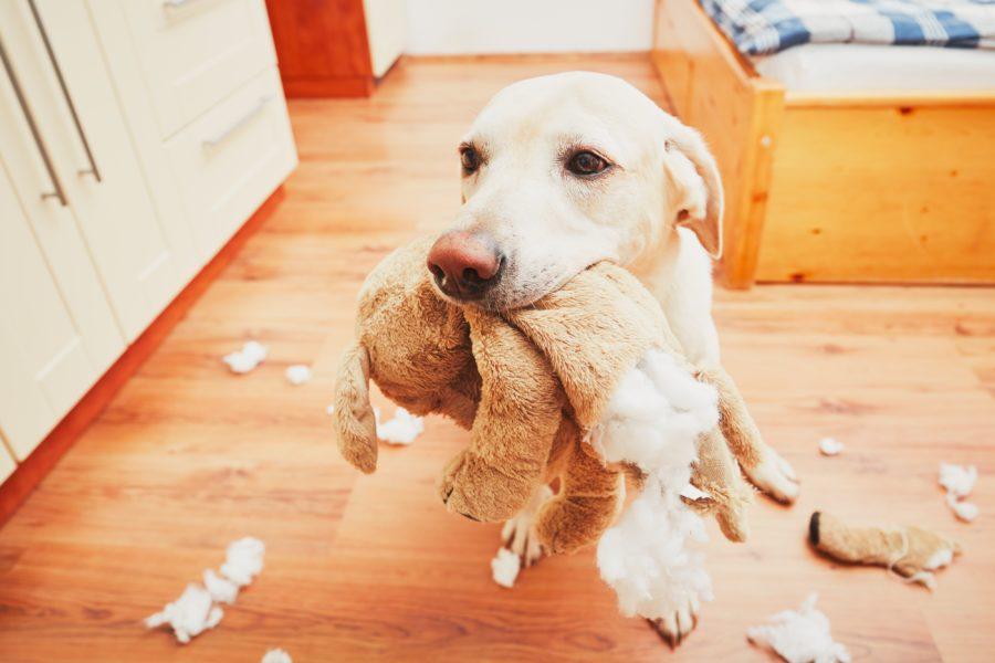 Comportamento canino: quais são as atitudes mais esperadas de um cão?