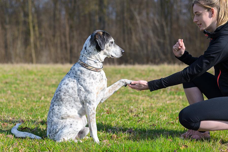 Mulher segurando a pata do seu cachorro ao ar livre enquanto faz um sinal com a outra mão indicando a comunicação entre pet e dono