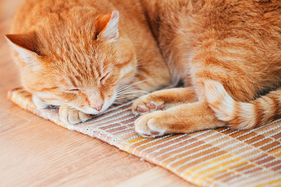 Gato deitado em um tapete