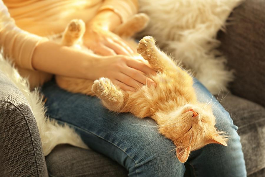 Como a microbiota intestinal pode influenciar na saúde dos pets?