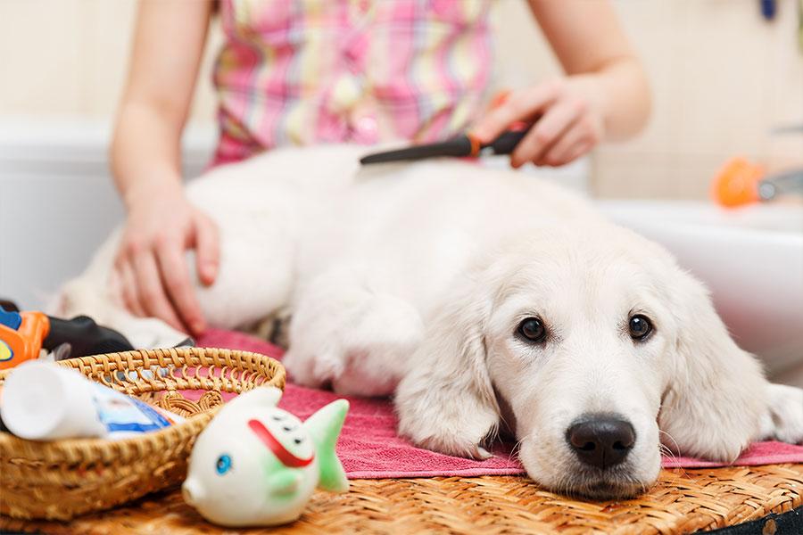 Cachorro tendo seu pelo escovado