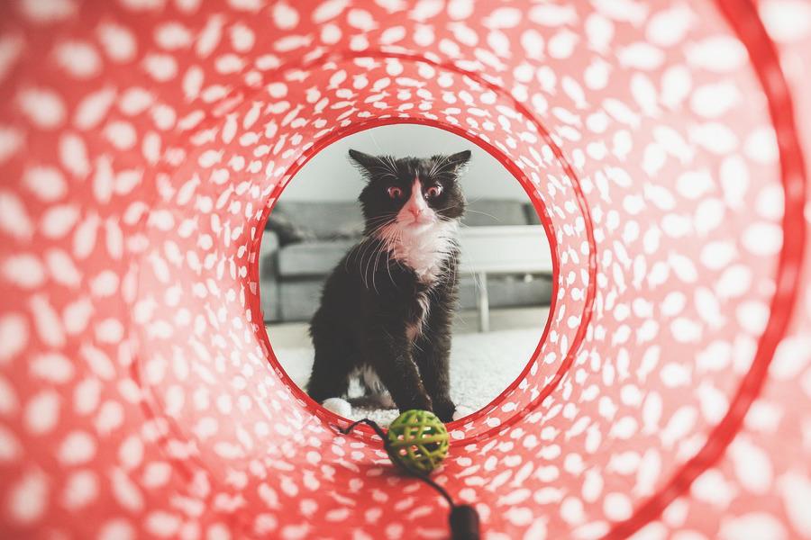Visão de dentro de um túnel recreativo para pet. Um gato olha para uma bolinha dentro dele com cara de quem vai tentar pegá-la.