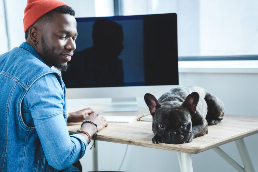 Estresse do homem no computador afeta saúde emocional do seu cachorro que está triste ao lado
