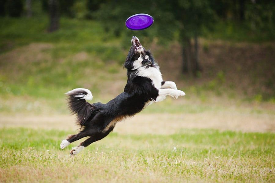 Atividades de enriquecimento ambiental: uma rotina boa pra cachorro!