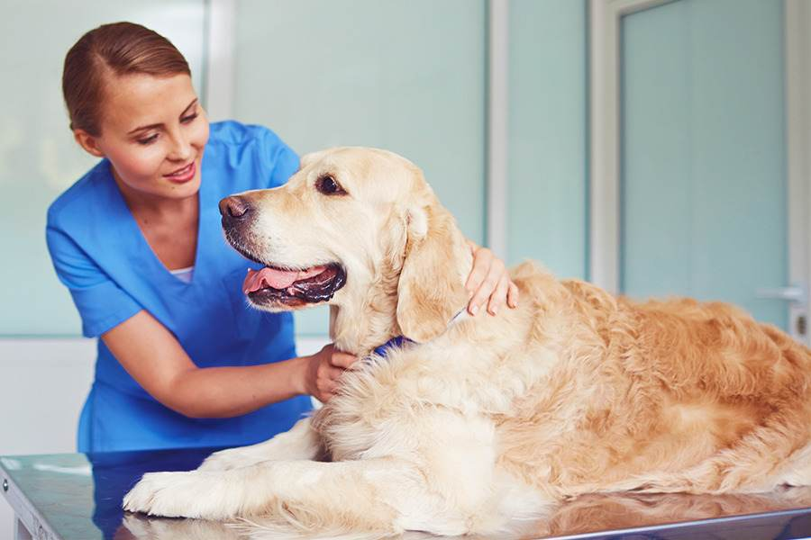 Mastocitoma em cães e gatos: causas, sintomas e tratamentos