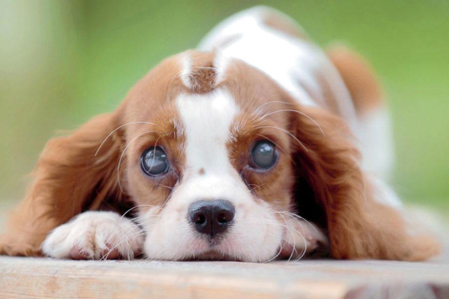 Úlcera de córnea nos cães e gatos