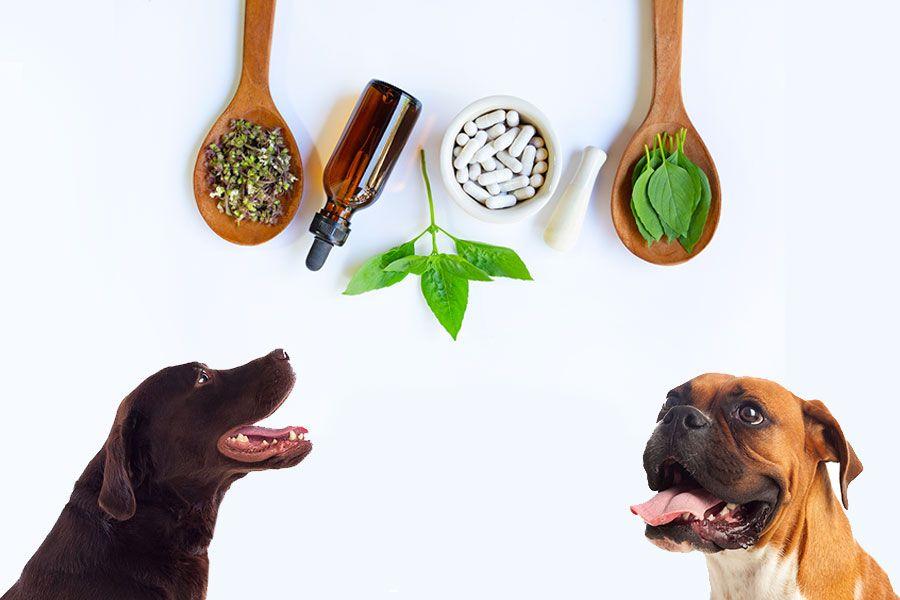 Homeopatia para Pets: tudo sobre os tratamentos alternativos