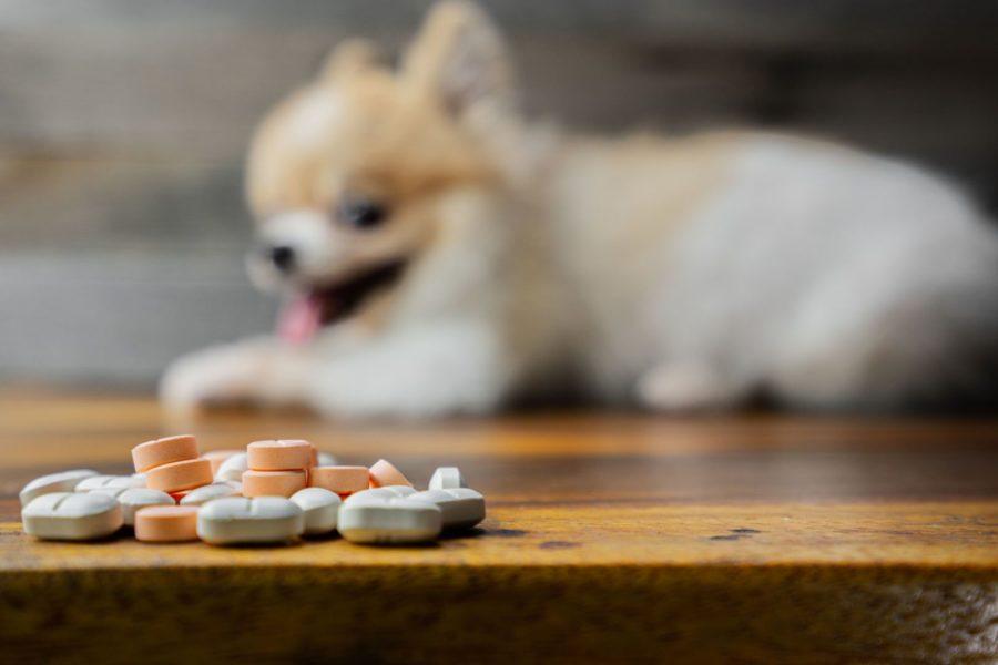 Pílulas em foco no primeiro plano enquanto um cachorro desfocado no fundo está deitado no chão