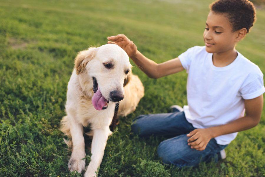 Bem-estar canino: vamos conversar sobre ele?