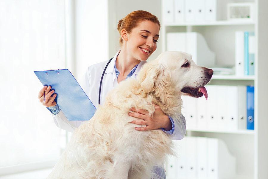 Cachorro de pelagem branca sendo tocado por uma veterinária que está com um prancheta na mão