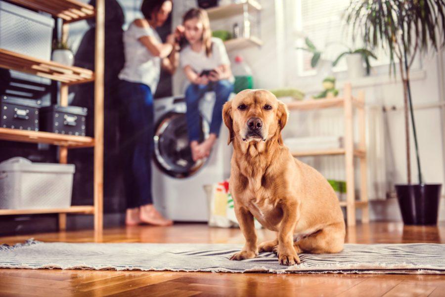 Como evitar acidentes domésticos com o seu pet?