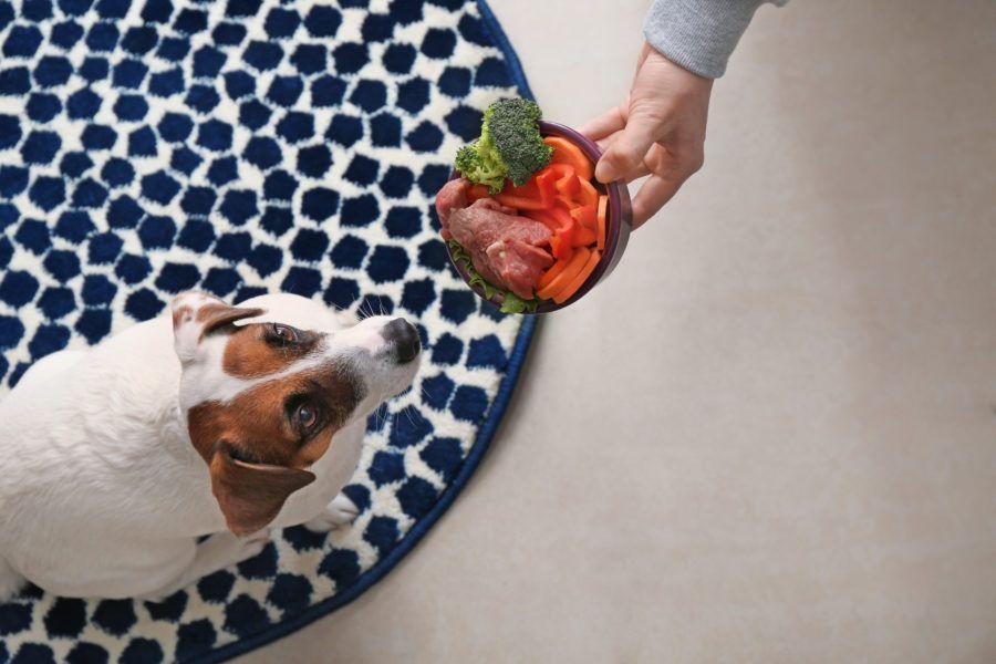 Alimentação natural para cães: como calcular a quantidade de comida do seu pet?
