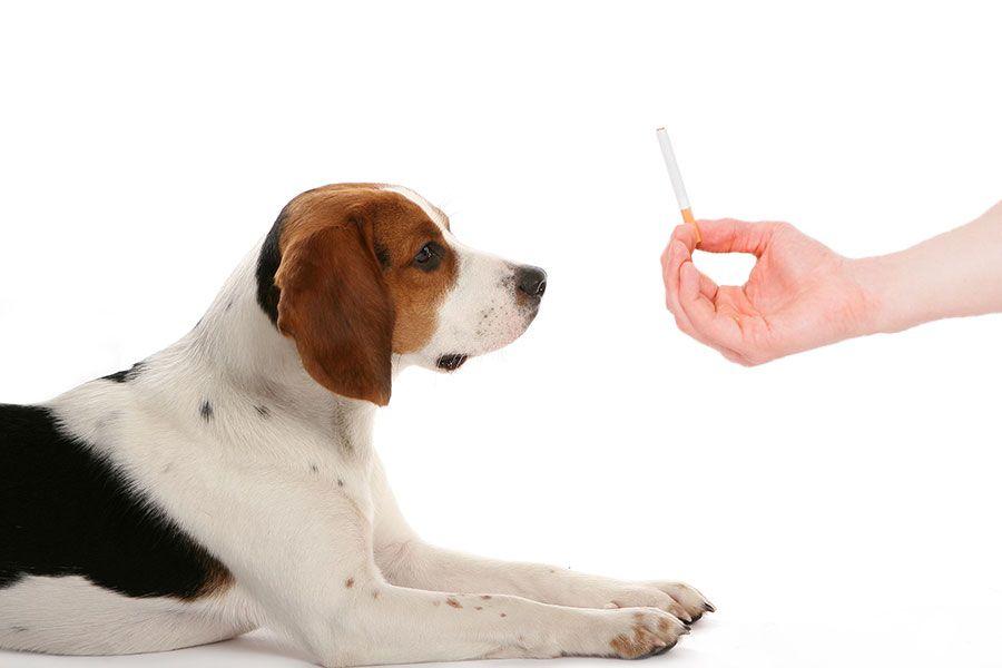 Pets como fumantes passivos: quais são os riscos e consequências?