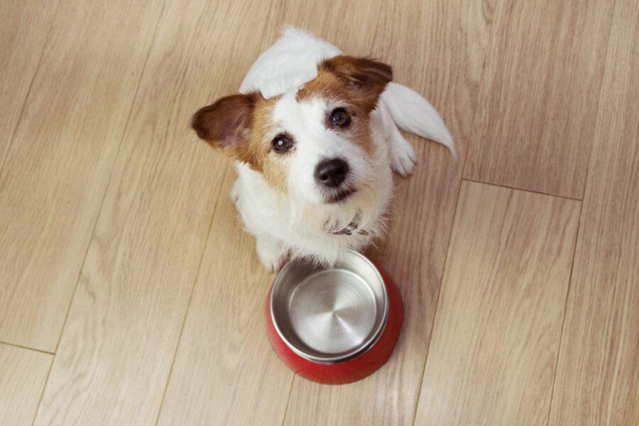 Alimentação natural para cães: quais suplementos são necessários?